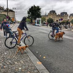 Riding #bicycles and #walking the #dogs in #Paris (at Quai de Montebello)