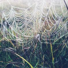 Dewy web. Photo and Copyright by Sidsel Hartlev.