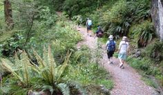 Walking down the Routeburn Track