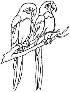 parrot parrot couple coloring page - Parrot Pictures To Color