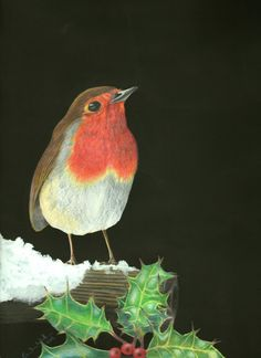 Winter Robin - Drawing by Eula Wilkin (Original)  Water soluble Caran D'Ache Supracolor Soft Aquarelle Pencils & Gouache  on 180gm Cartridge Paper.    Unframed.  Drawn area 20cm by 29cm