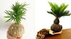 Kokedamas – Mis Jardines Air Plants, Cactus Plants, Plantar, Vegetables, Outdoor, Style, Gardening, Gardens, Exterior Houses