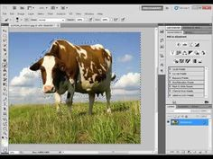 Photoshop CS5   Content Aware Fill