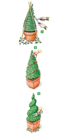 The best time for the boxwood topiary is March or late June. - The best time for the boxwood topiary is March or late June. A slight cut back of already formed fi - Boxwood Garden, Topiary Garden, Boxwood Topiary, Garden Art, Garden Design, Small Gardens, Outdoor Gardens, Buxus, Front Yard Landscaping