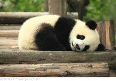 Pandas, Pandas, Pandas!
