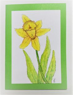 Watercolor Daffodil Card Watercolor Pen and Ink Daffodil