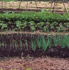Vegetable Gardening Newbie? This Guide Has Tons of Information: Growing More Vegetables in a Small Space