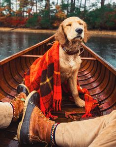 Astonishing Everything You Ever Wanted to Know about Golden Retrievers Ideas. Glorious Everything You Ever Wanted to Know about Golden Retrievers Ideas. Cute Puppies, Cute Dogs, Dogs And Puppies, Doggies, Animals And Pets, Cute Animals, Animals Photos, Dog Photos, Autumn Aesthetic