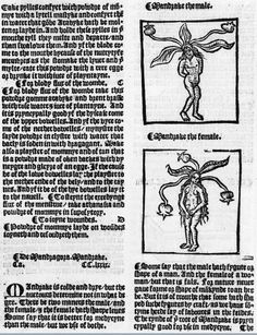 Mandragora, 1529, Peter Treveris, The Grete Herball, The Wellcome Library