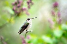 Pastel Bird Art Hummingbird Art Photo Prints by ChristinaRolloArt
