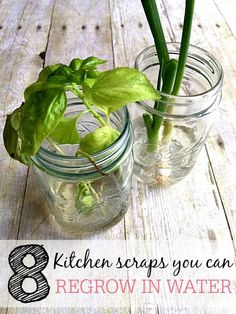 Stop throwing out those kitchen scraps. Check out these 8 kitchen scraps you can regrow in water. You can save more money by growing your own produce and herbs again and again.