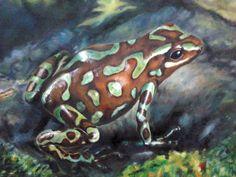 Tropikalna żaba  format: 50 cm x 70 cm