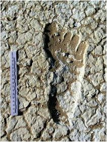 Nephilim Giants and their huge ancient footprints have set in stone. Unexplained Mysteries, Ancient Mysteries, Ancient Artifacts, Aliens And Ufos, Ancient Aliens, Ancient History, European History, American History, Nephilim Giants