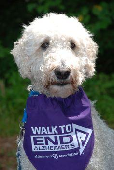 Pets can go purple to raise Alzheimer's awareness! Walk To End Alzheimer's, Alzheimer's Association, Alzheimers Awareness, Alzheimer's And Dementia, Purple Reign, Ribbon Colors, Great Photos, Walking, Faces