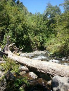 Rio y bosque