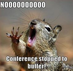 General Conference meme, squirrel