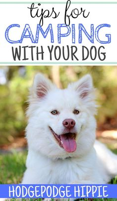 Do you take your dog camping with you? These simple camping tips can help! Dog Training Classes, Best Dog Training, Camping With Kids, Go Camping, Rv Organization, Hiking Dogs, Camping Photography, Camping Games, Dog Runs