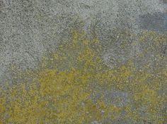 New Rough Concrete Texturediscover textures Concrete, Texture, Painting, Free, Home Decor, Surface Finish, Decoration Home, Room Decor, Painting Art
