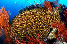 diving manado - Google Search