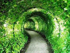 Green Tunnel Castle Garden UK
