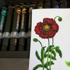 @olesya_kharkova their beautiful red flower artwork