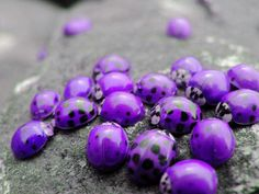Pretty purple Ladybugs. wish ladybugs really did come in this color. there was a…