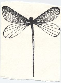 dragonfly drawing - Google Search