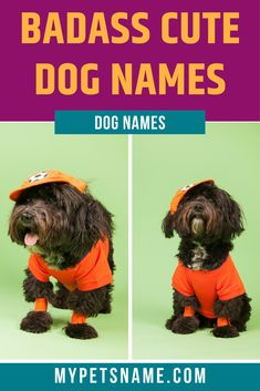 If you're looking for a name that is cute yet super badass, check out our list of badass cute dog names, that has names like Marco, which is derived from 'Mars', after the Roman god of war. Cool Pet Names, Cute Names For Dogs, Best Dog Names, Best Dogs, Super Cute Dogs, Mars, Badass, Your Dog, Roman
