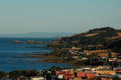 Penguin, Tasmania.  Diane Purdie