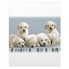 #Shy Golden Retriever Puppies Plaque - #golden #retriever #puppy #retrievers #dog #dogs #pet #pets #goldenretriever