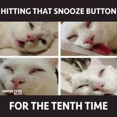 cat meme snooze button good morning Good Morning Meme, Funny Good Morning Images, Morning Cat, Morning Humor, Morning Quotes, Stupid Funny Memes, Hilarious, Funny Stuff, Funny Things