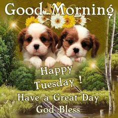Have A Great Day, God Bless tuesday tuesday quotes happy tuesday tuesday pictures tuesday images good morning tuesday quotes Tuesday Quotes Good Morning, Happy Tuesday Quotes, Tuesday Humor, Cute Good Morning, Good Morning Photos, Good Morning Greetings, Good Morning Wishes, Morning Quotes, Thursday Quotes
