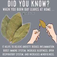 Do you burn bay leaves❓❓❓ Health Hacks! ➡️ IG 👉🏽 Do you burn bay leaves❓❓❓ Health Hacks! Burning Bay Leaves at home is healthy 😁 I love burning bay leaves. Bay leaves have anti-anxiety properties. Natural Health Remedies, Natural Cures, Natural Healing, Natural Life, Herbal Remedies, Natural Treatments, Health And Wellness, Health Tips, Health Fitness