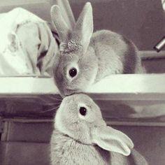 Dolci conigli! [Prodotti per conigli e roditori: http://www.pacopetshop.it/Conigli-e-Roditori/13/33065/]