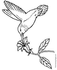 hummingbird coloring book page this hummingbird is drinking from a tropical flower you will find a lot more birds coloring pages in the gallery