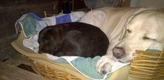 La piccola Camilla con Lucy.