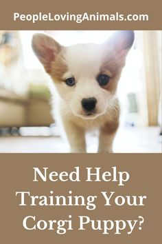Doggy Dan's Perfect Puppy Program is the best puppy training for your Corgi puppy. It's effective and affordable. Puppy Training, Dog Training