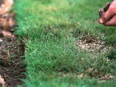 Can your lawn be salvaged or should you start over? Answers --> http://www.hgtvgardens.com/lawn-care/lawn-patrol-renovate-or-redo-your-lawn-landscaping?soc=pinterest