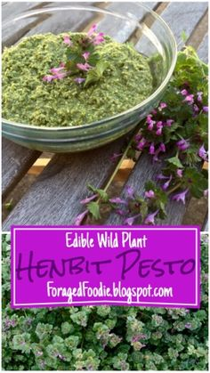 """Vegetarian henbit, macadamia, and asiago pesto. Foraging recipe made with edible """"weeds"""" of early spring. From the ForagedFoodie"""