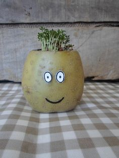 Bannisters' Farm Potato Cress Head Day 7 Eyfs Activities, Kids Learning Activities, Summer Activities, Cress Heads, Apple Tree Farm, Anchor Crafts, Hero Crafts, Dear Zoo, Farm Day