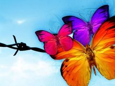 """Full Square Diamond DIY Diamond Painting """"Colorful butterfly"""" Embroidery Cross Stitch Rhinestone Mosaic Painting Home Decor Wallpaper Hipster, Images Wallpaper, Computer Wallpaper, Live Wallpapers, Wallpaper Backgrounds, Wings Wallpaper, Butterfly Facts For Kids, Butterfly Pictures, Cute Butterfly"""