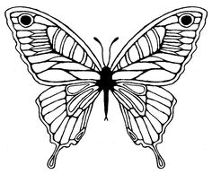 Butterfly Wing Drawing - ClipArt Best