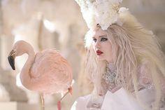 White Witch & Flamingo   Flickr - Photo Sharing!
