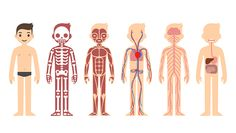 Illustration of body systems.
