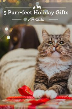 Purr-fect Holiday Gifts for Cats. Purr-fect Holiday Gifts for Cats. Great gifts for your cat will promote his future happiness and health. Here are a few Christmas gifts for cats that will give everyone a reason to purr. Gifts For Pet Lovers, Pet Gifts, Siberian Cats For Sale, Cat Brain, Cat Merchandise, Cat Tent, Felt Cat, Cat Accessories, Pet Costumes