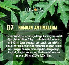 07. Ramuan Anti Malaria Healthy Fruits, Healthy Drinks, Healthy Tips, Herbal Remedies, Home Remedies, Natural Remedies, Natural Medicine, Herbal Medicine, Apothecaries