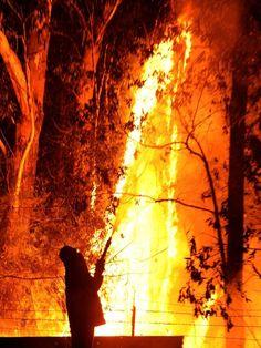 Firefighter battles NSW blaze Wildland Firefighter, Volunteer Firefighter, Hot Shots, Bushfires In Australia, Coral Castle, Firefighter Pictures, Wild Fire, Fire Art, Great Pictures