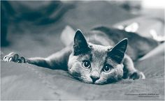 cat Izzy