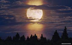moonlight nature wallpaper 2
