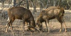 Adventure In Kanha - Pench While Exploring Tour